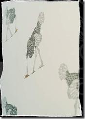 ostrich white