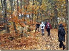 cirés forêt de Fontainebleau