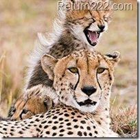 animales_bonitos (53)