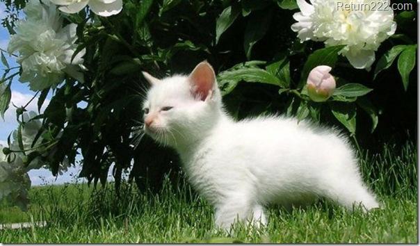 fotografias-gatos-peq