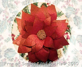 Poinsettia_CloseUp
