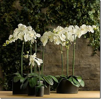 Restoration Hardware- faux phaleonopsis orchids