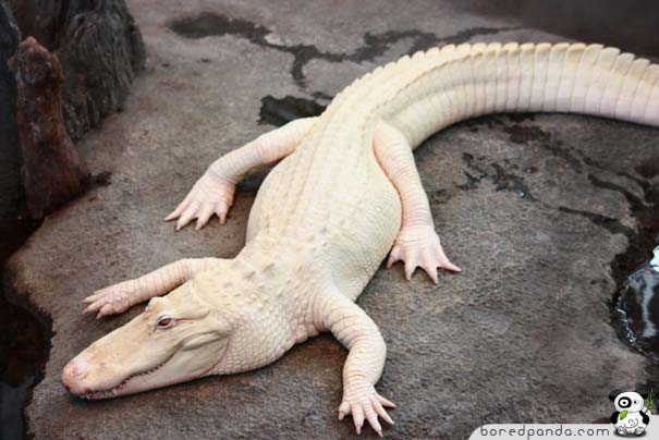 When God Runs out of Paint: 26 Albino Animals