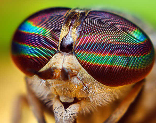 20 Incredible Eye Macros | Bored Panda Fly Eyes