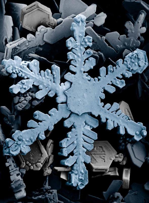 عالم المجهريات Looking-at-the-World-through-a-Microscope-snow.jpg