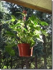 Plants 012