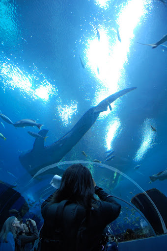 Gloria was amazed by the size of the whale shark.