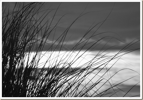 Abstract Reed Grass 1 copy