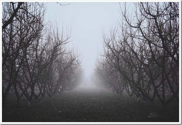Orchard 1b