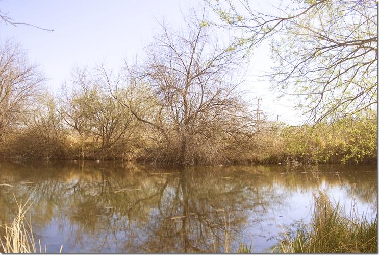 Wilson Ponds 1 J