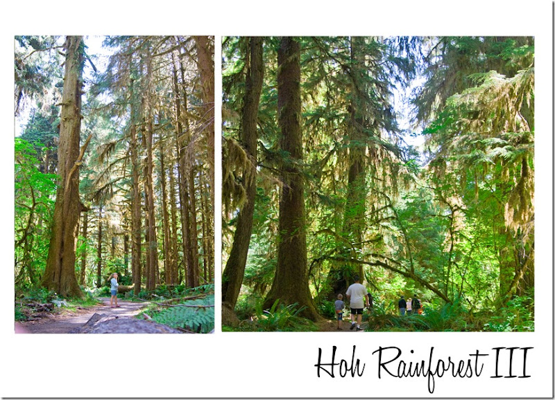 Hoh Rainforest 3