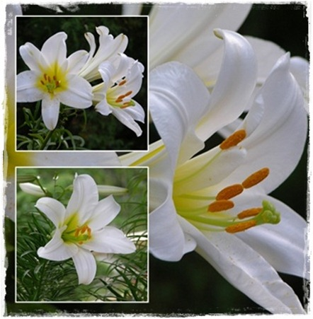 2 lilja