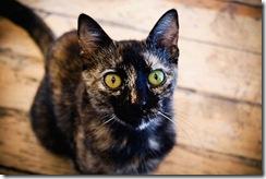 Animais olhos cores lindos (3)