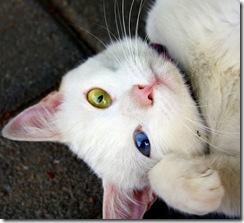 Animais olhos cores lindos (9)