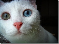 Animais olhos cores lindos (11)
