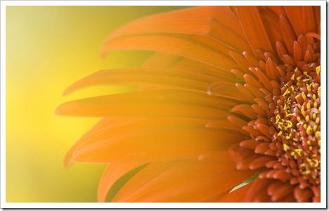 imagem_gratis_dicas_BBB11_flagras (103)