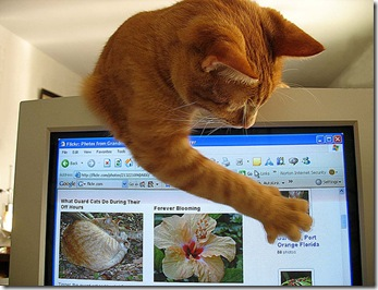 web designer for cat