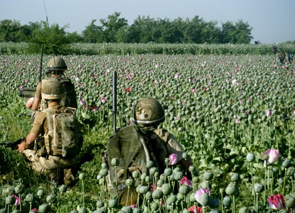 soldiers in poppy fields