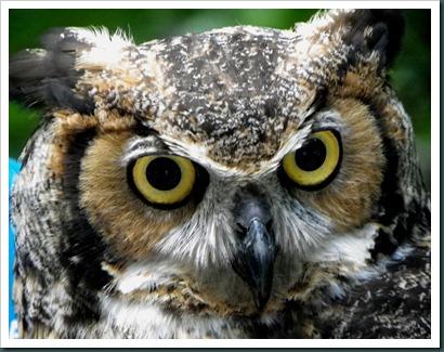 owlex closeup (4)