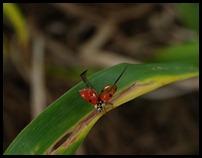 ladybug wings open