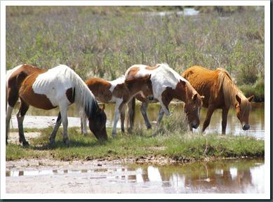 pony and 3