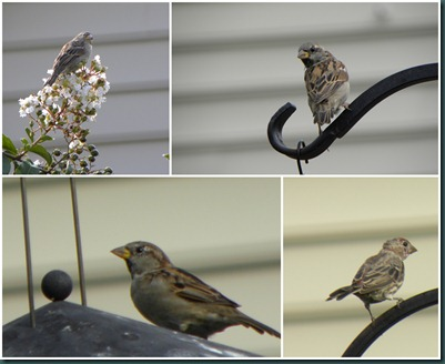 birds on feeder collage