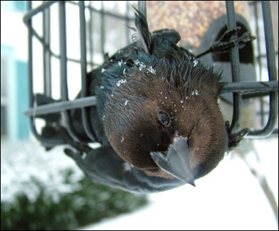 stuck in feeder