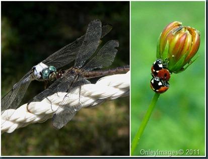 bug collage