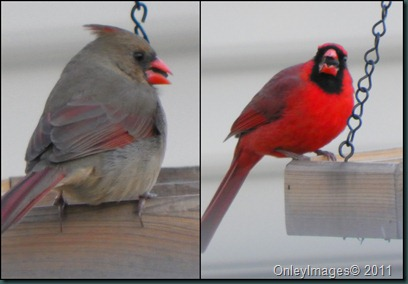 cardinals collage 022011