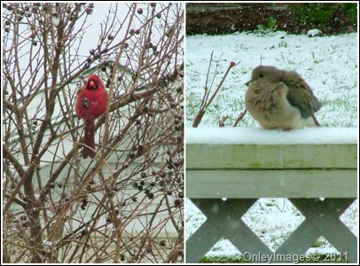 snow birds collage0327