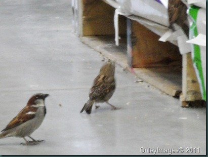 lowes birds031311 (13)