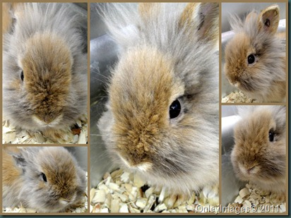 bunny collage0403