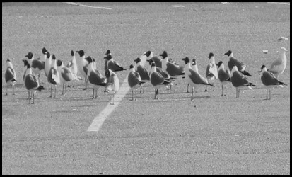 gull lineup (1)