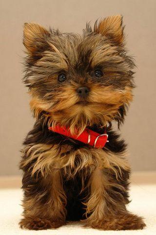 Cute Dog Picture iPhone Desktop Wallpaper
