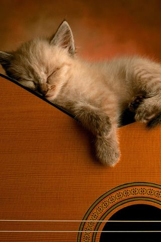 iPhone Desktop Wallpaper Cute Cat Sleep