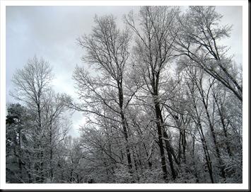 2009 snow 010