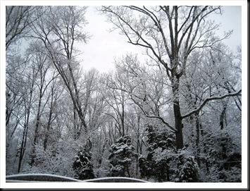 2009 snow 009