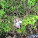 Таиланд, Пхукет, остров обезьян