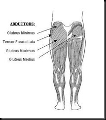 Glutes-Muscles
