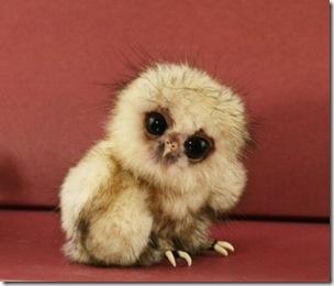 baby-owl-400x342
