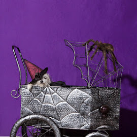 Halloween Buggy by Shannon Foster - Animals - Dogs Portraits
