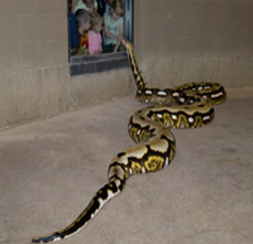 history_python