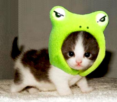 Очень милые и симпатичные маленькие котята.