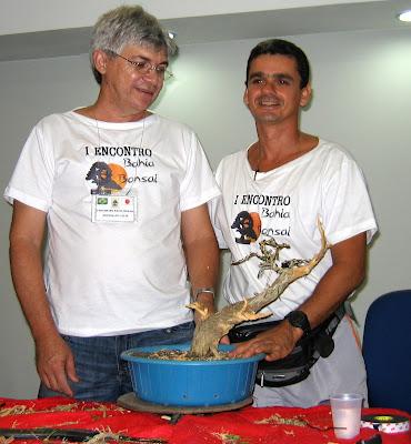 EVOLUÇAO DE UM PROJETO COM UMA CALIANDRA SPINOSA IMG_4617