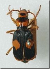beetles02