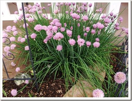 herb garden june09 011