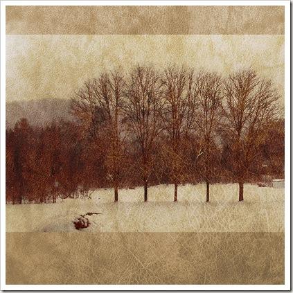 winter trees texture