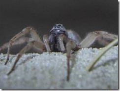 biodiversidad_clip_image002_0517