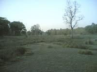 Kanha5 Meadows2.jpg