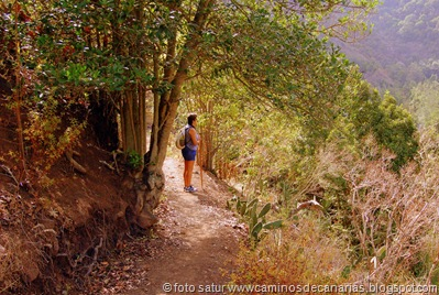 1384 Camino de la Laurisilva